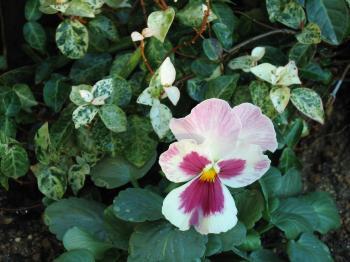 garden+025_convert_20081202184603.jpg