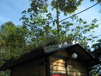 屋根の上の植栽