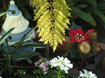 garden+026_convert_20081219231204.jpg