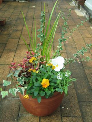 garden+029_convert_20081109174709.jpg