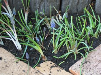 garden+029_convert_20090319101020.jpg