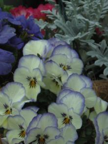 garden+031_convert_20090309202602.jpg