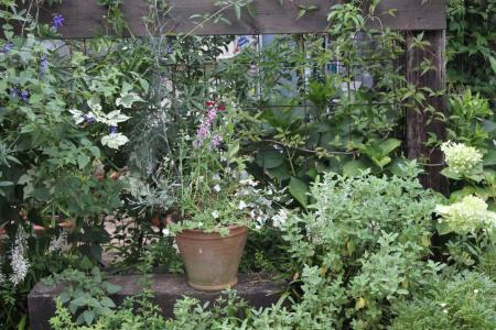 8月の南面花壇