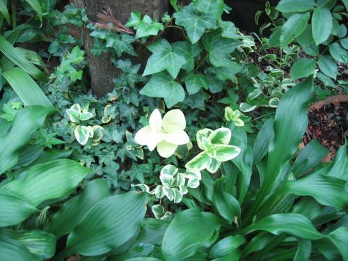 garden+032_convert_20081031224618.jpg