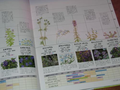 garden+033_convert_20090129211546.jpg
