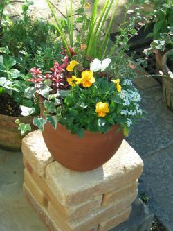 garden+035_convert_20081113134619.jpg