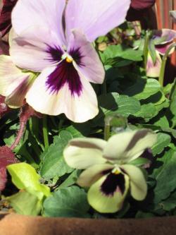 garden+047_convert_20090113113431.jpg