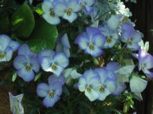 garden+049_convert_20090501122522.jpg