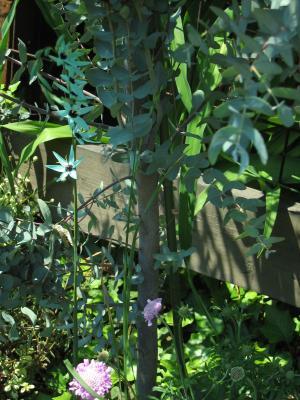 garden+051_convert_20090429161247.jpg