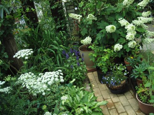 6月4日の庭