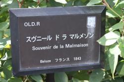 スヴニール ド ラ マルメゾン