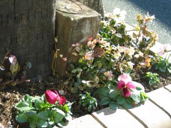 garden+065_convert_20090113113849.jpg