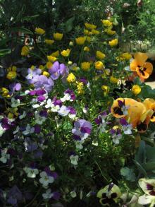 garden+069_convert_20090501123135.jpg