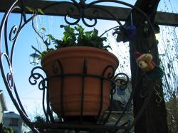 garden+071_convert_20081219231733.jpg