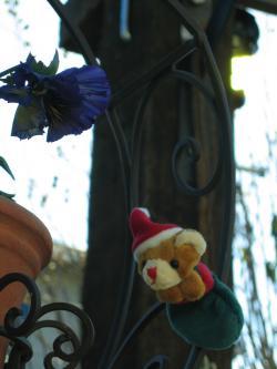 garden+074_convert_20081219231509.jpg