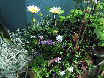 garden+081_convert_20090501124809.jpg