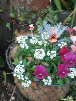 garden+100_convert_20081219230106.jpg