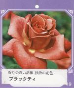 garden004_convert_20090216142929.jpg