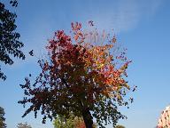 fall7.jpg