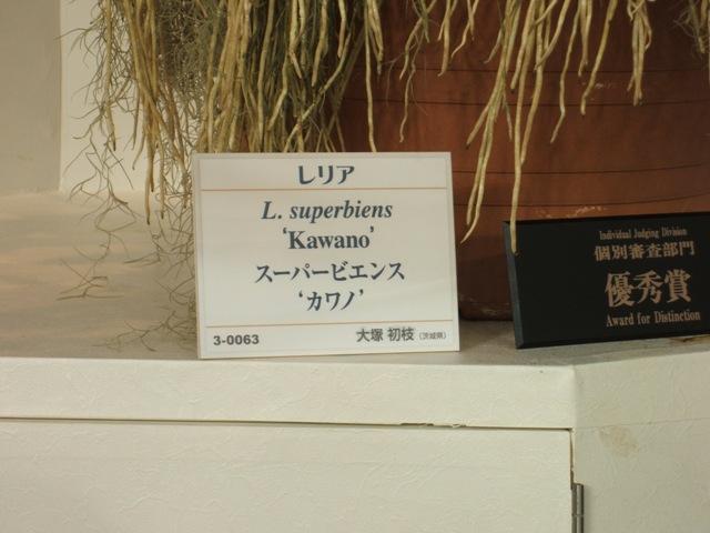 Lス-パ-ビエンス-2