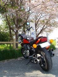 京都流れ橋から滋賀の信楽たぬきへ出発