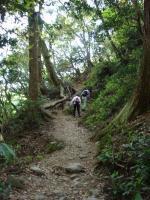 山道を歩いていきます。