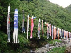 松尾川温泉前の川にこいのぼりがかかってました!