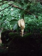 木の枝にモリアオガエルの卵を発見!