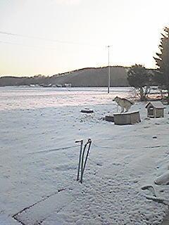 20090417b.jpg