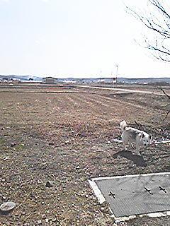 20090417e.jpg