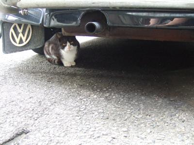 momo under the car