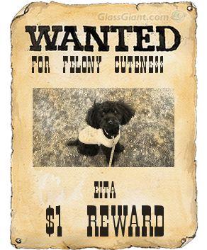 wantedposter_20090219121743.jpg