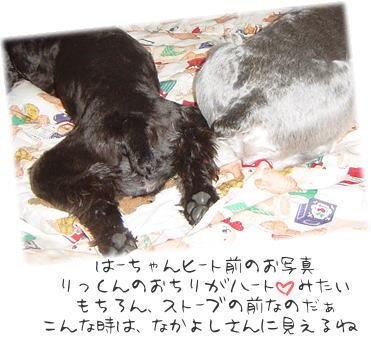 20040304.jpg