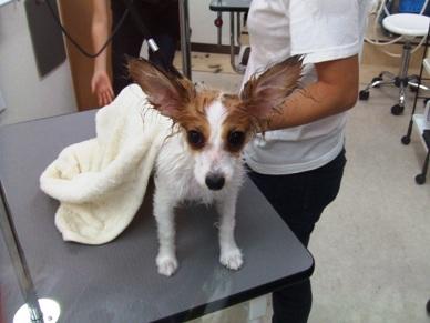 濡れネズミ…