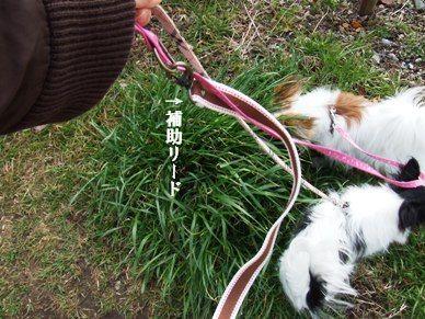 マリステ@お散歩