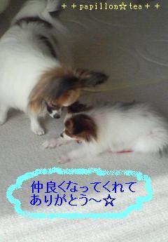 200805221555000-ふきだし