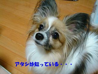 DSC03959.jpg