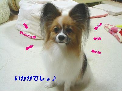 DSC03969.jpg