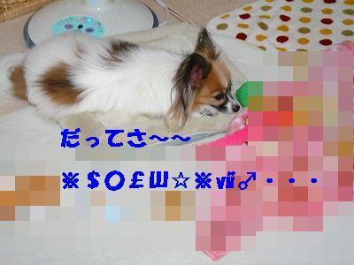 DSC06097_20090907010606.jpg