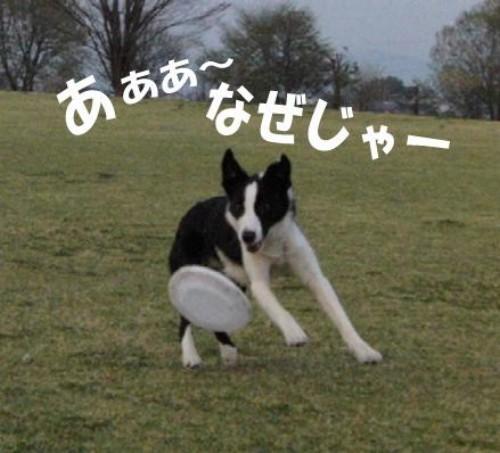 5_20090413205249.jpg