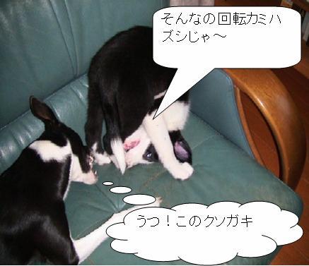 7_20090314232711.jpg