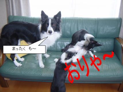 7_20090316224430.jpg