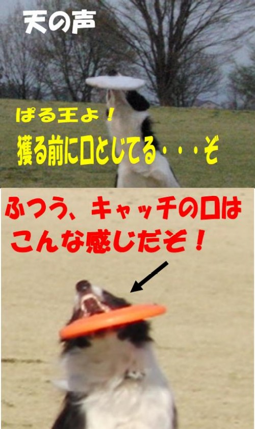 7_20090413210717.jpg