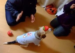 0220pa_ichigo_atama.jpg