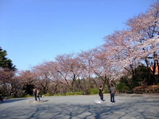 0330sakura1.jpg