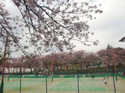 0401shinyoko.jpg