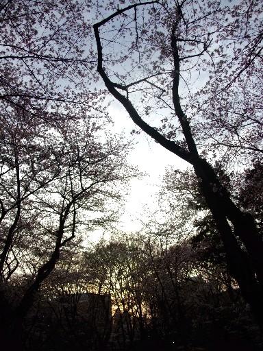 0403sakurayama_gyakkou.jpg