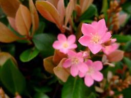 0422hana_pink.jpg