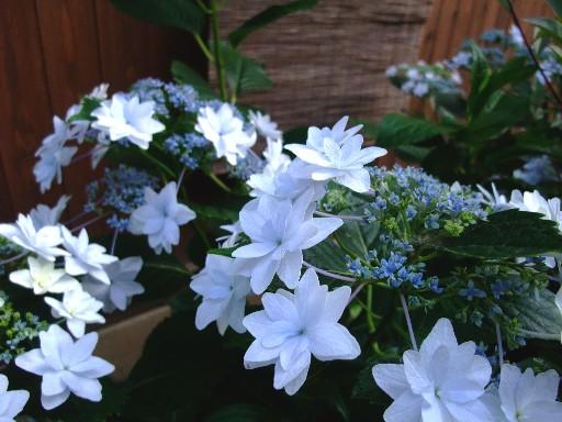 0607gaku_blue.jpg