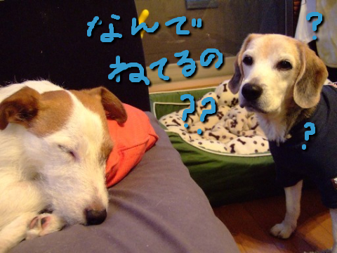 1129lapi_pa1_moji.jpg